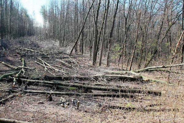 Идея о сборе сухостоя в лесах Башкирии легла в основу федерального «закона о валежниках»