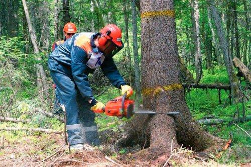 Караидельские лесорубы - третьи в конкурсе профессионального мастерства