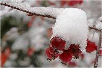 Синоптики Башкирии сообщили прогноз погоды на ближайшие три дня