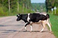 Девять человек в районе привлечены к ответственности за безнадзорно пасущийся скот