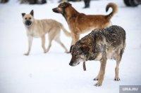 Куда обращаться гражданам по вопросам отлова бродячих собак?