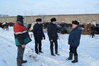 В сельхозпредприятиях района идет зимовка скота