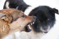 В Уфе в школьном дворе стая бродячих псов напала на пятиклассника