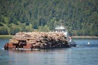 Река Уфа снова станет судоходной для перевозки леса