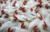 Аграрии района обсудили, как не допустить возникновение гриппа птиц